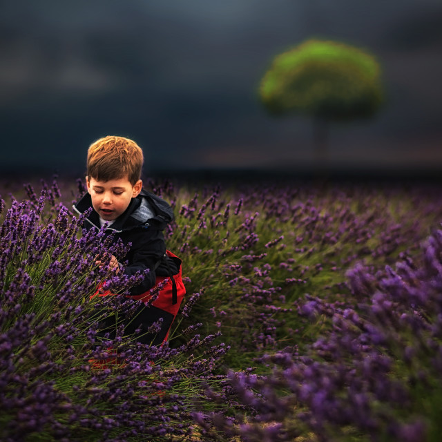 """Lavender Hill #2"" stock image"