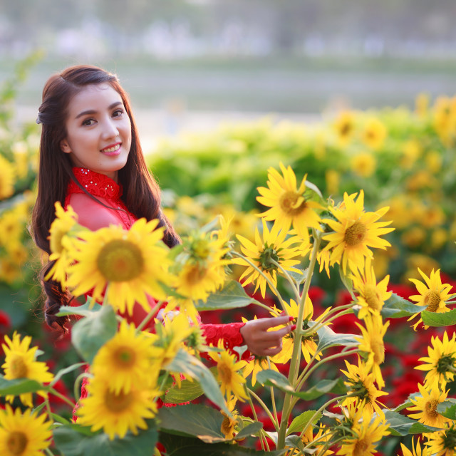 """Vietnamese girl wearing Red Ao dai in the spring lunar new year holiday with sun flowers"" stock image"