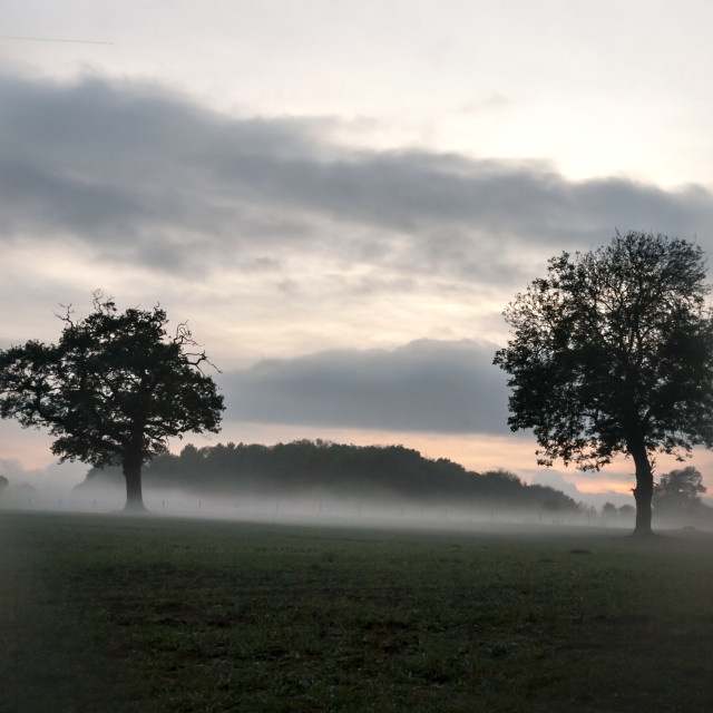 """""""Trees in the mist."""" stock image"""