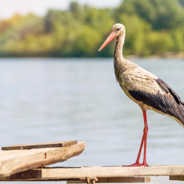 """Stork on the Pontoon"" stock image"