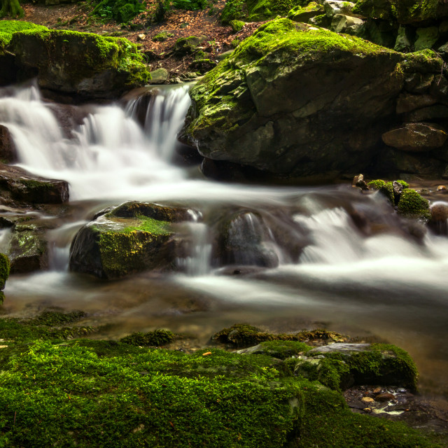 """""""Water cascade in a green forest"""" stock image"""