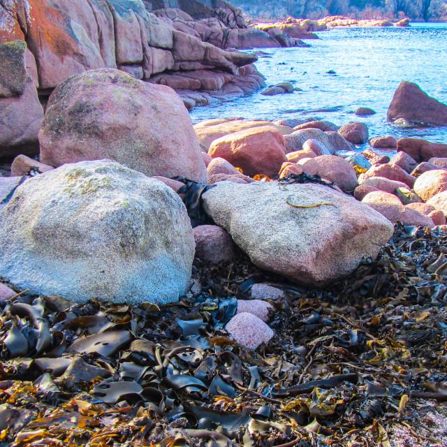 """Rock Colours on Tasmanian Beach"" stock image"