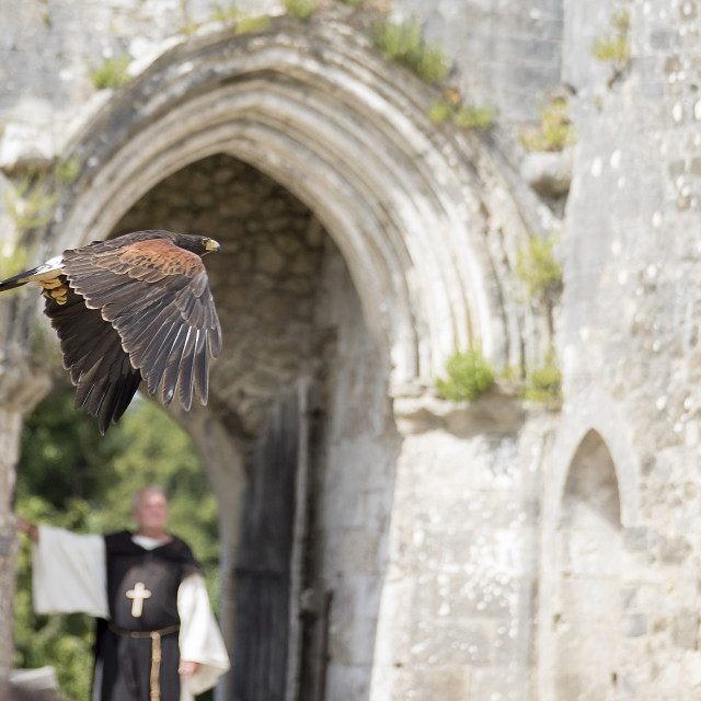 """Hawk flying in the Abbey"" stock image"