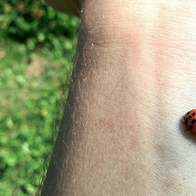 """""""The ladybug"""" stock image"""