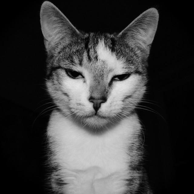 """""""Unimpressed Cat"""" stock image"""