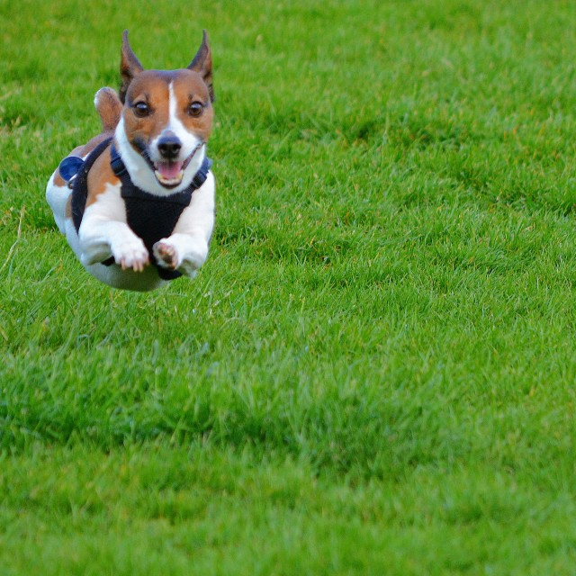 """""""Hover Dog"""" stock image"""