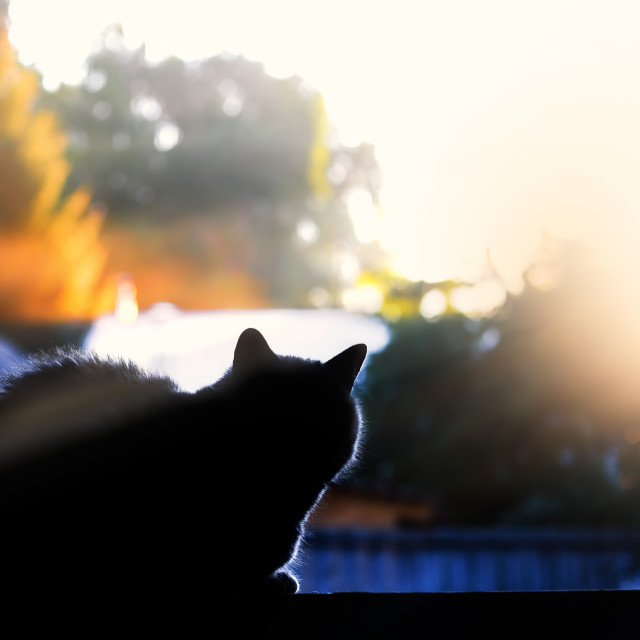 """Morning cat"" stock image"