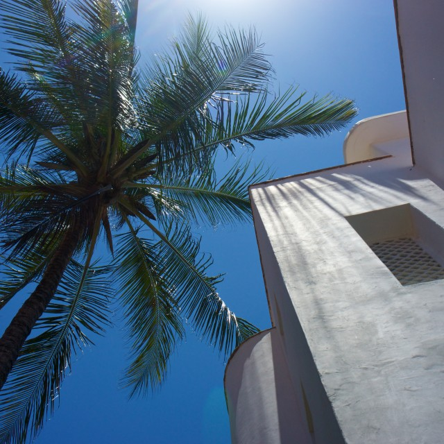 """Palm tree and white building"" stock image"