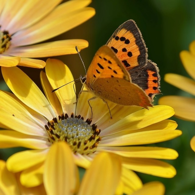 """""""Summer Butterfly."""" stock image"""