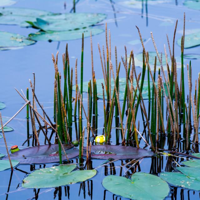 """Blue Pond"" stock image"