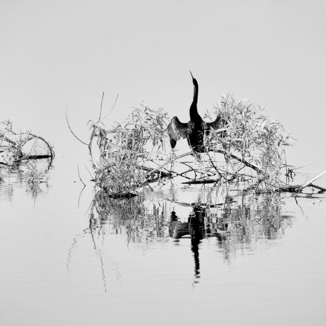 """""""Black and white reflections"""" stock image"""