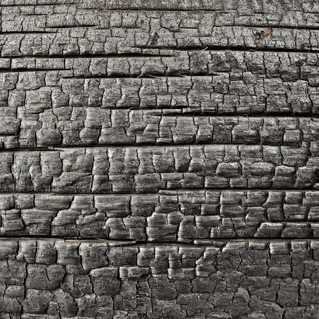 """Charred Redwood Tree DetailR"" stock image"