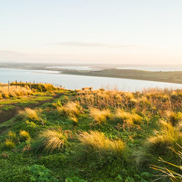 """""""Seaside Hill Walk Tasmania 6"""" stock image"""