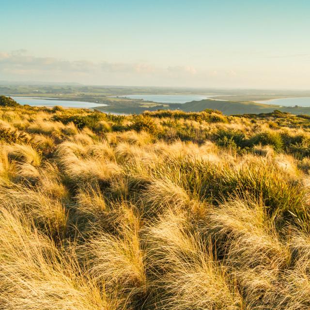 """""""Seaside Hill Walk Tasmania 1"""" stock image"""