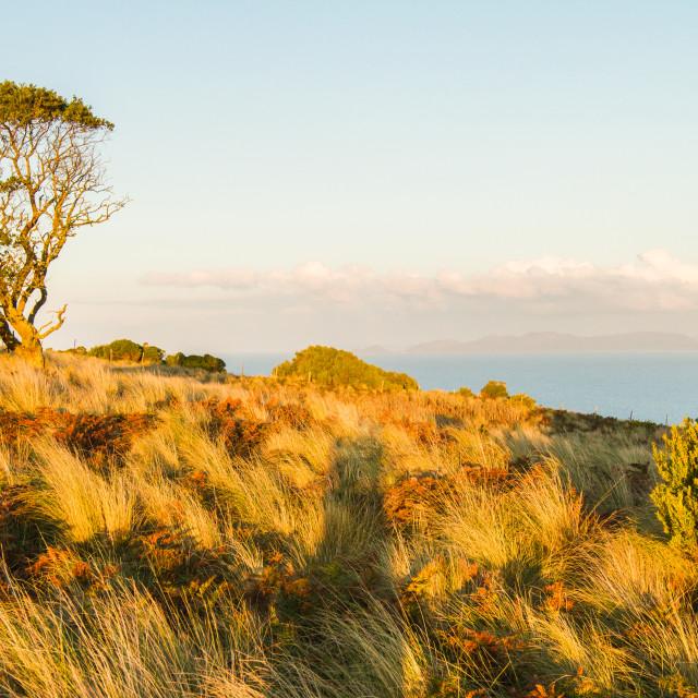 """""""Seaside Hill Walk Tasmania 5"""" stock image"""