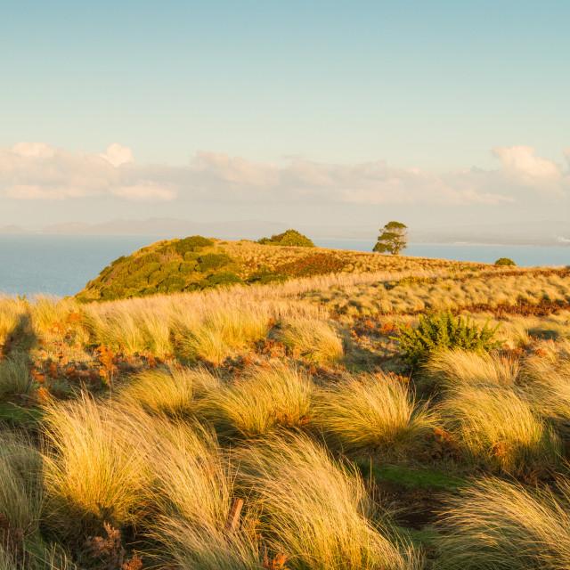 """""""Seaside Hill Walk Tasmania 2"""" stock image"""