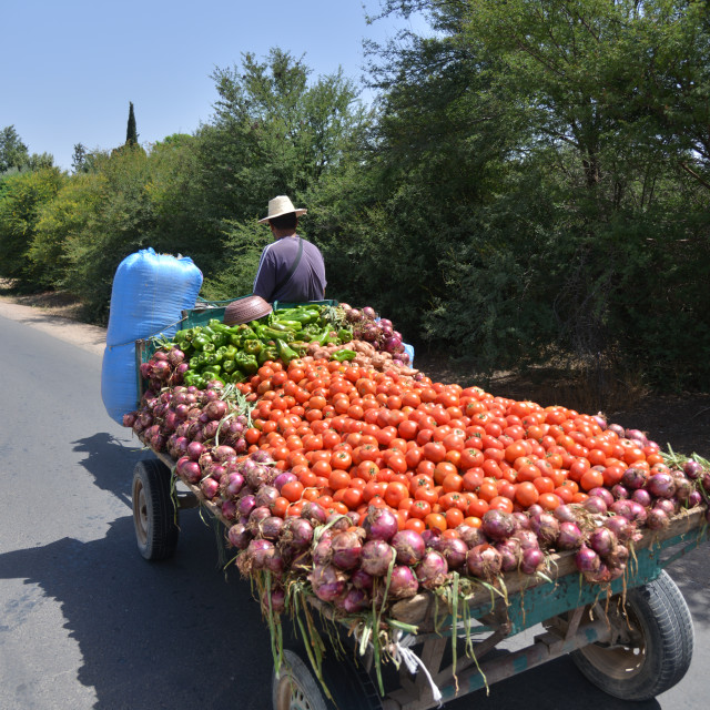 """Farmer carrying vegetables on a cart pulled by a horse-Morocco"" stock image"