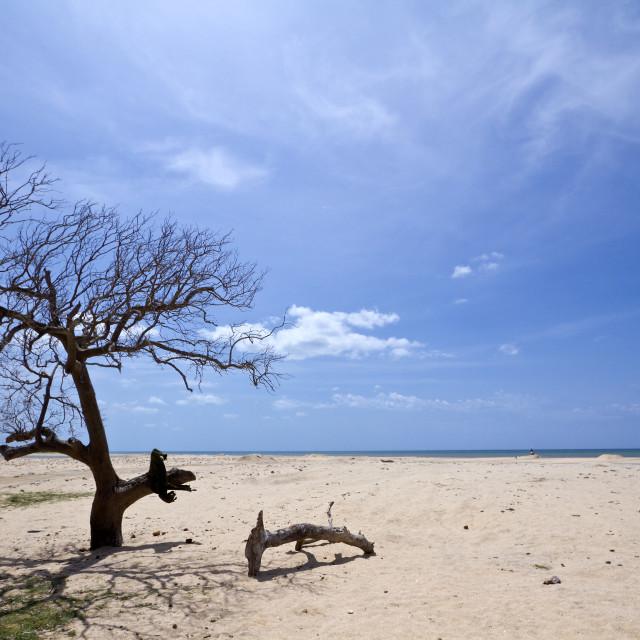 """""""Kokkilai lagoon, Sri Lanka"""" stock image"""