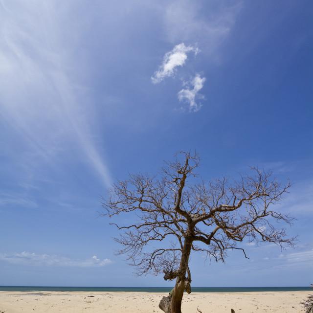 """""""Kokkilai lagoon beach, Sri Lanka"""" stock image"""