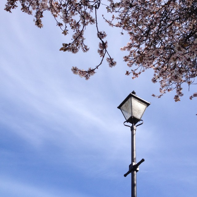 """Street lamp under cherry blossom"" stock image"