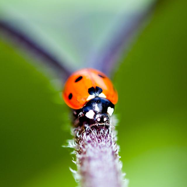 """Ladybird"" stock image"
