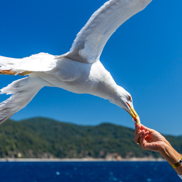 """""""Touching the nature"""" stock image"""