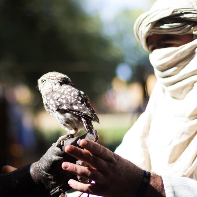 """Muslim with owl"" stock image"