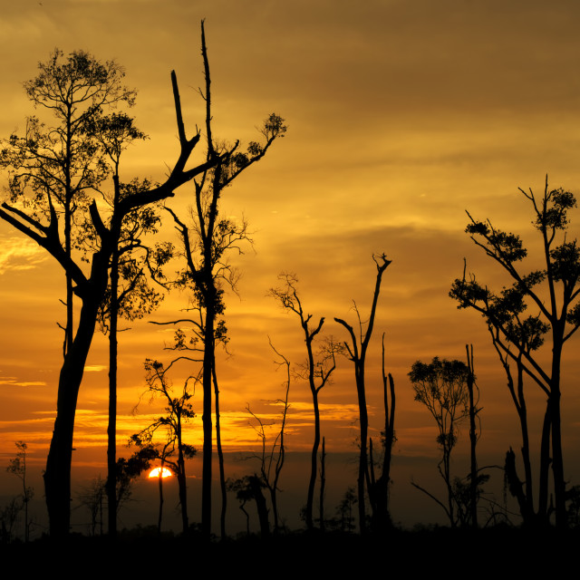 """""""Trees on the background of a beautiful sunset"""" stock image"""
