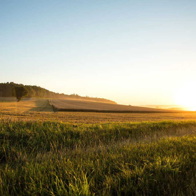 """""""Sunset over a harvested field"""" stock image"""