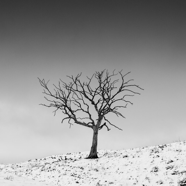 """Winter Tree"" stock image"
