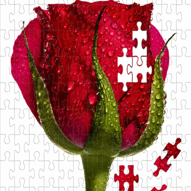 """Jigsaw rose"" stock image"