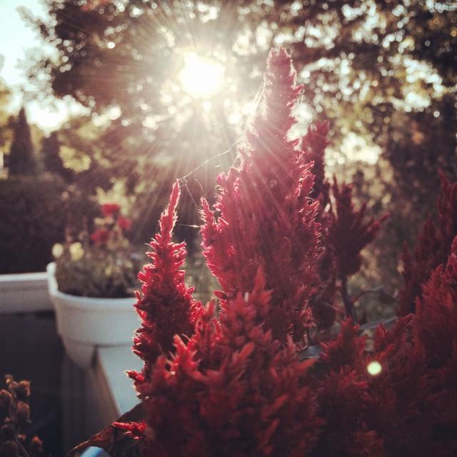 """""""Summer Sunshine"""" stock image"""