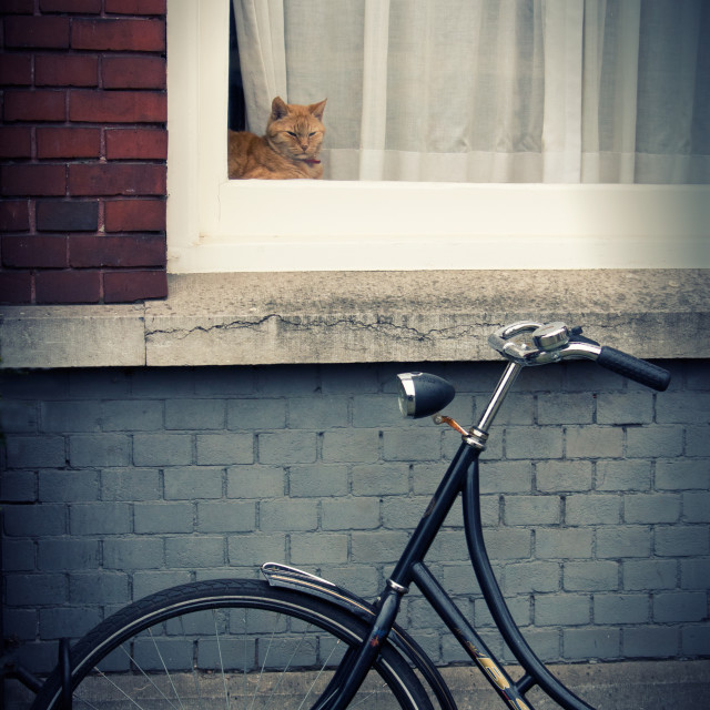 """Orange cat in a window"" stock image"