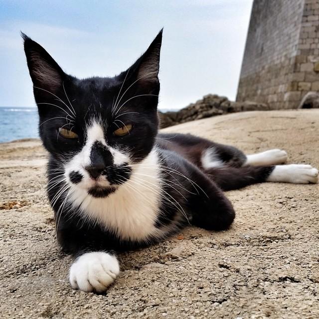 """Serious cat"" stock image"