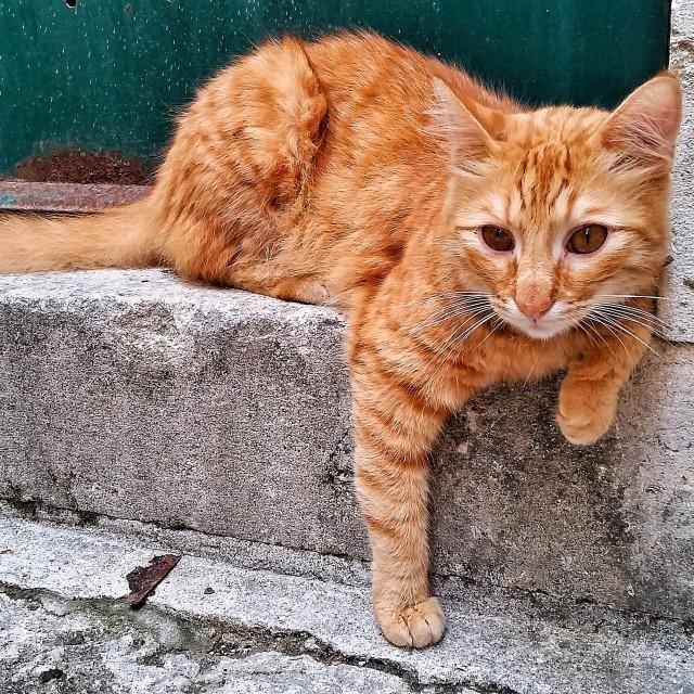 """""""Cute cat"""" stock image"""