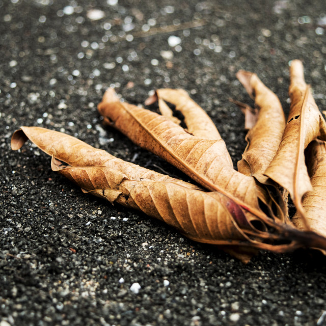 """""""Dry and Dead Autumn Leaves"""" stock image"""