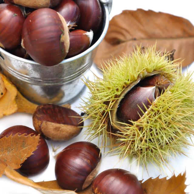 """""""autumal fruits"""" stock image"""