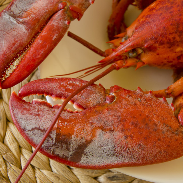 """Lobster on a plate"" stock image"