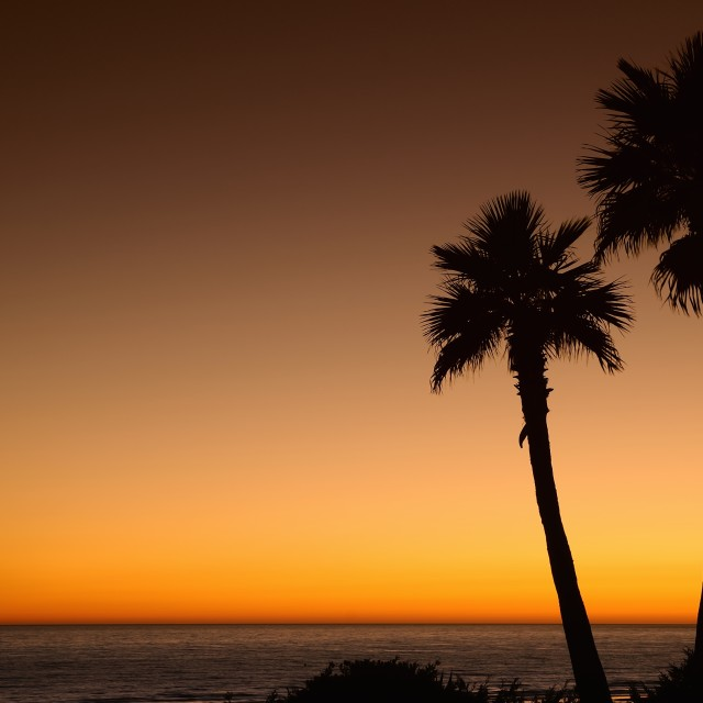 """Sunset with palms."" stock image"