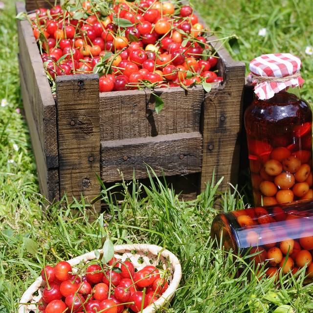 """Cherries."" stock image"