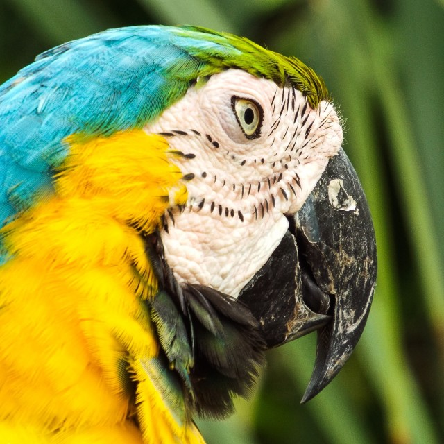 """Bright Parrot"" stock image"