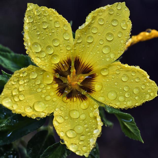 """yellow petals"" stock image"