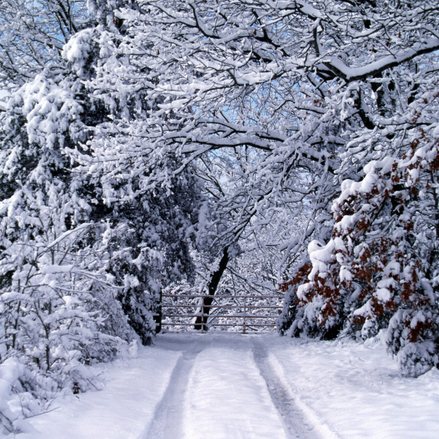 """Ozarks Winter Wonderland"" stock image"