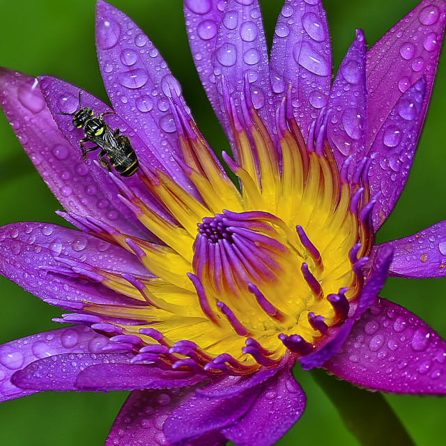 """""""flora & fauna"""" stock image"""
