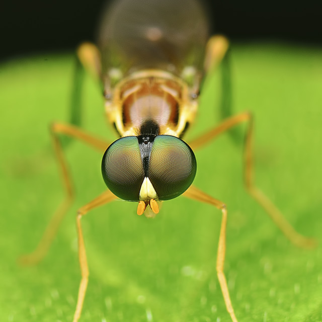 """tiny insect"" stock image"