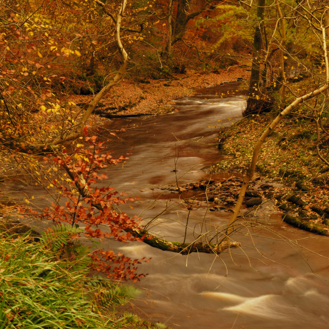 """Fall Stream"" stock image"
