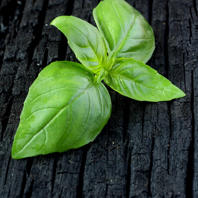 """Sweet Basil"" stock image"