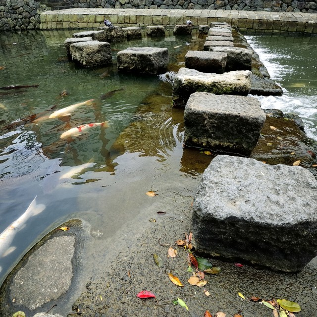 """Fish and Stepping Stones"" stock image"