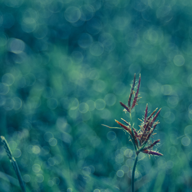 """Cool bokeh in early morning"" stock image"