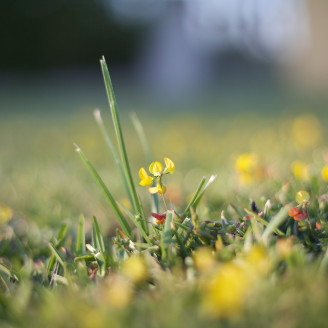 """Flowers in the Grass"" stock image"
